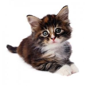 billig kattförsäkring